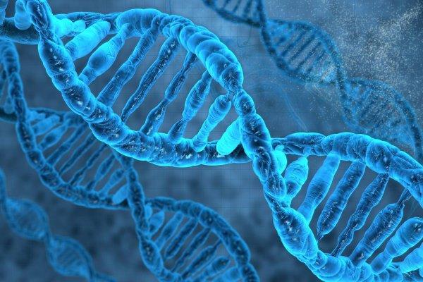 Ученые назвали «прыгающие гены» - паразиты важным эволюционным фактором