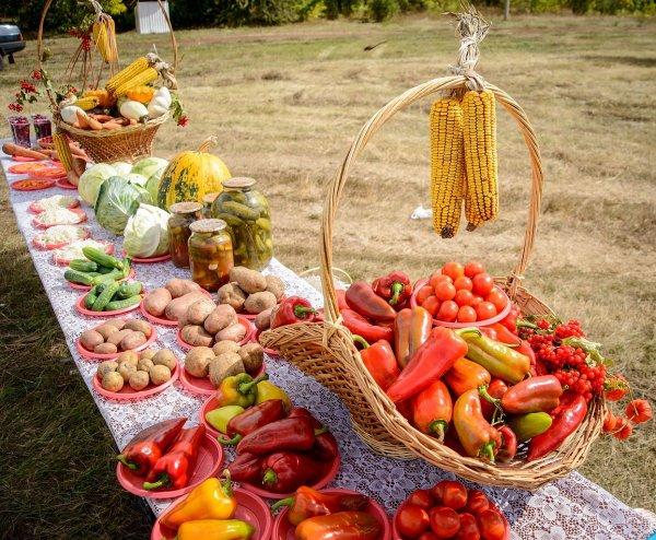 Ученые советуют есть растительную пищу ради спасения мира