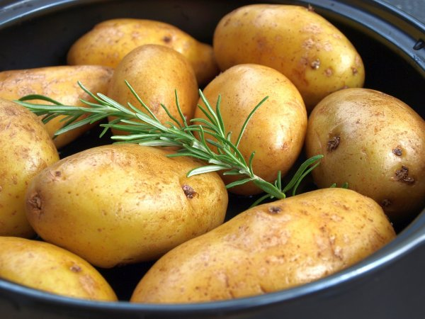 Эксперты поведали, можно ли похудеть, употребляя один картофель