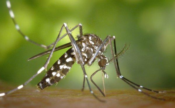 Ученые поместили 240 комаров в один кубический сантиметр для почтовой пересылки