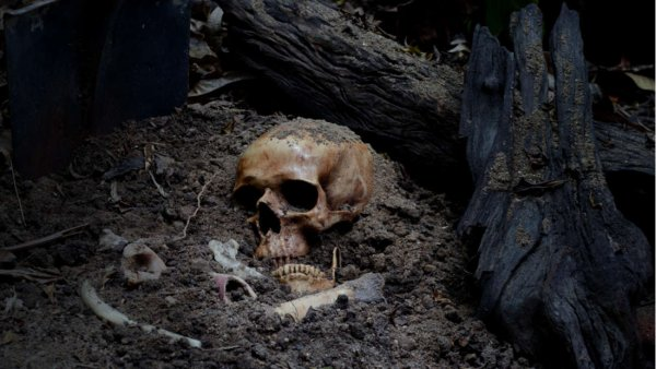 Пол древних скелетов может быть определен по одному зубу - Ученые