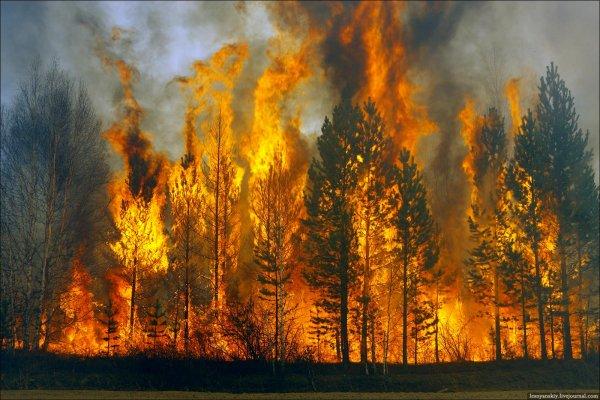 Уфологи: Пожары в Калифорнии возникли из-за пришельцев