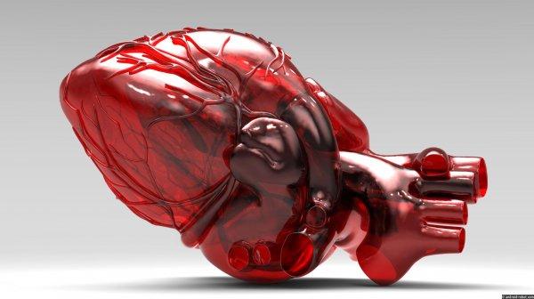 Российские ученые испытали искусственное сердце на карликовых свиньях