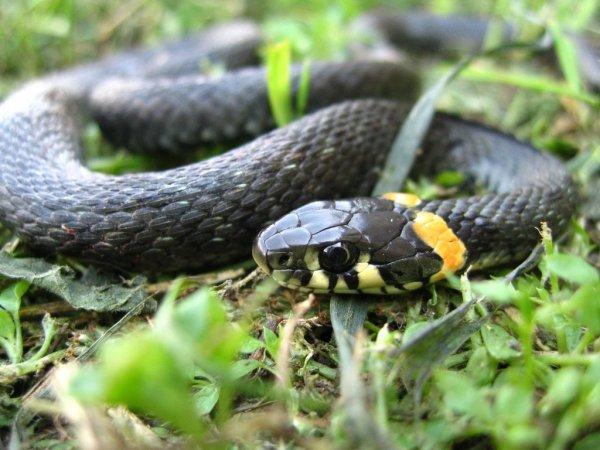 СМИ: В центре Ростова-на-Дону ползает опасная змея