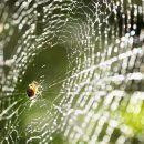 Пауки в городах всё меньше боятся света – учёные