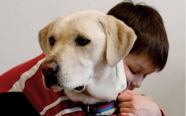 Собакотерапия: В момент бедствия человеку нужно гладить пса для успокоения – учёные