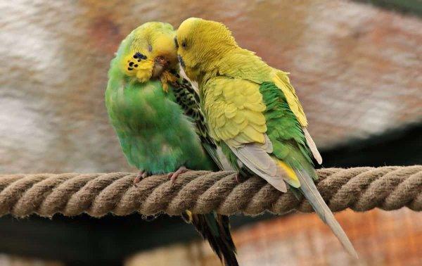 Учёные выявили причины долголетия попугаев путём анализа их генома