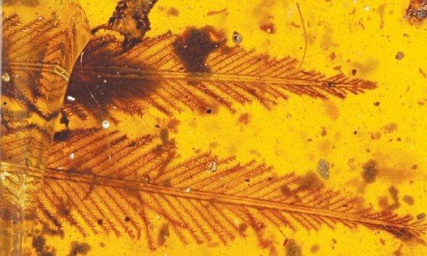 В Китае обнаружили перья птиц возрастом 100 млн лет