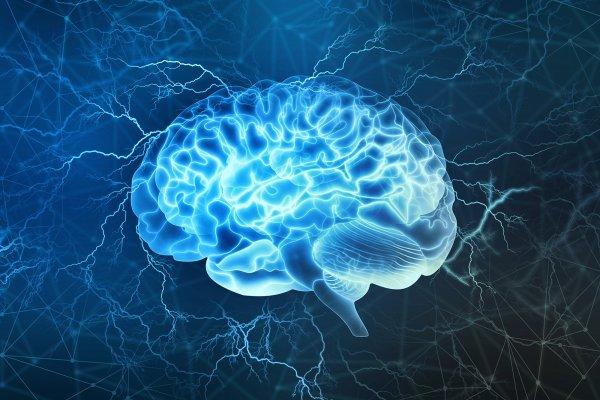 В будущем лечить слабоумие будут выращиванием нового мозга – учёные