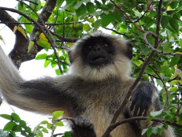 Ученые: Первые приматы появились в Северной Америке или Европе