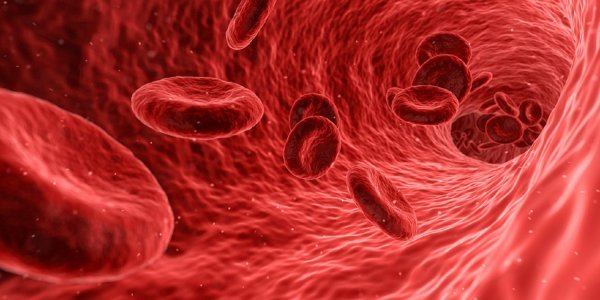 Ученые «перепрограммировали» кровь человека в стволовые клетки нервной системы