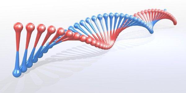 Ученые обнаружили «гены алкоголизма»