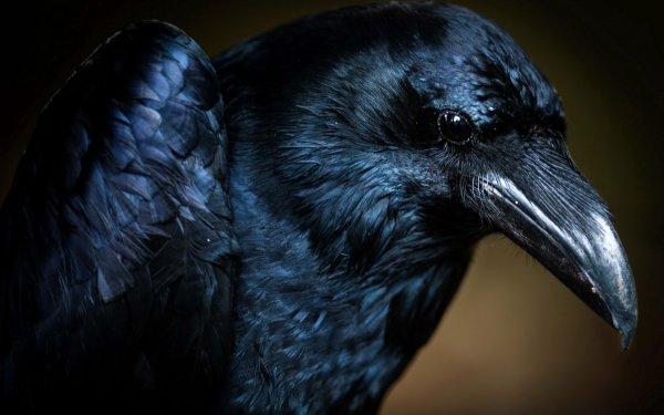 Вороны выявляют вес предмета через визуальное восприятие