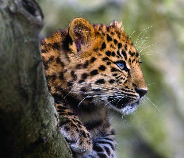 Экологи назвали количество вымирающих видов животных