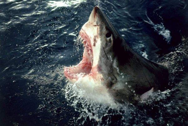 Австралийские исследователи тестируют гидрокостюмы, которые защищают от укусов акул