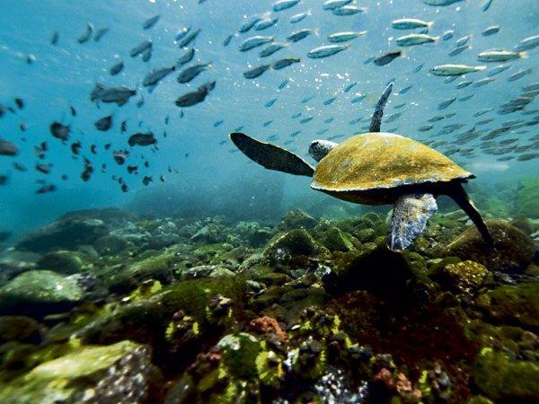 Вторжение на Галапагос: Незваные гости угрожают местной фауне