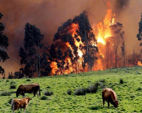 Нибиру будет сожжена: Пожары в Испании могли вызвать испытания лучевого оружия против НЛО