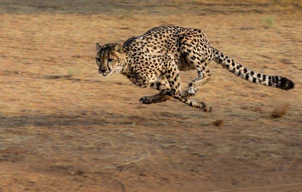Размер тела влияет на скорость животных