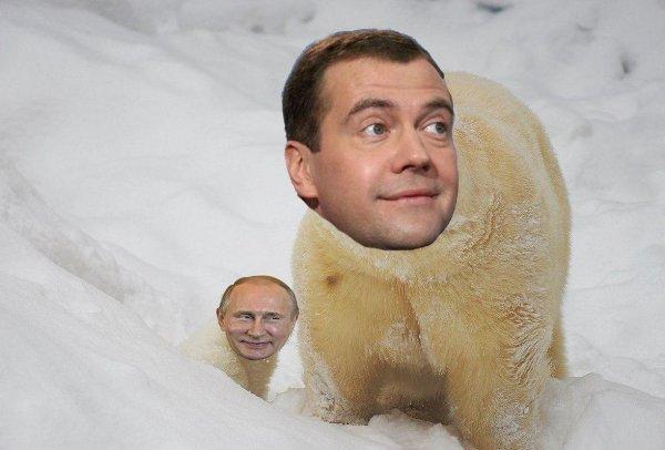 У правительства свой Умка: Заблудившего мишку сравнили с Медведевым, - как растопить сердца Россиян?