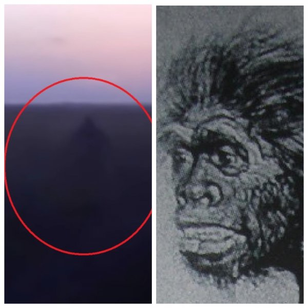 Выживший неандерталец? Мохнатый великан напал на семейную пару в России