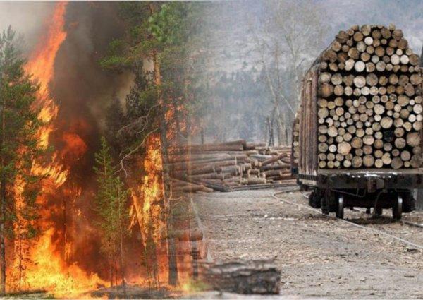 «Землю китайцам готовят?»: Россияне выдвинули свою причину пожаров в Забайкалье