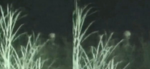Как в фильме «Знаки»: Пришельцы начали массово заманивать людей в леса