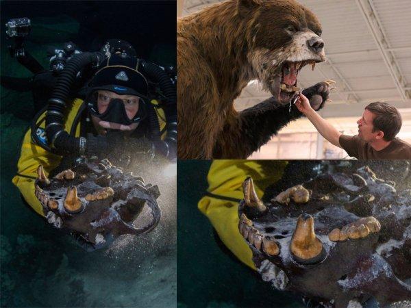 Учёные нашли древние останки самого крупного медведя-людоеда в истории Земли