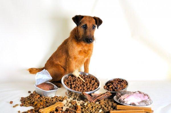 Чем кормить собаку? Корм против человеческой еды